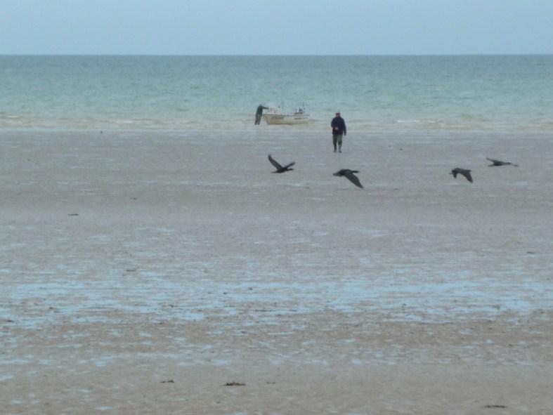 L'homme aux cormorans