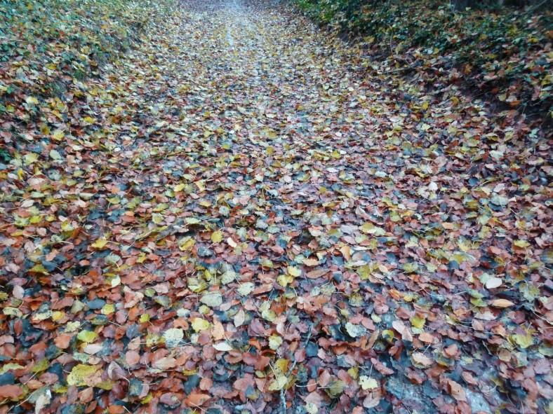 Routes _ feuilles mortes