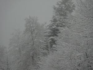 6_Vosges 332